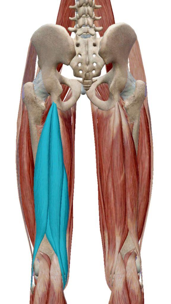 ハムストリング,股関節