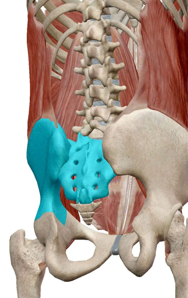 腰痛,原因,仙腸関節