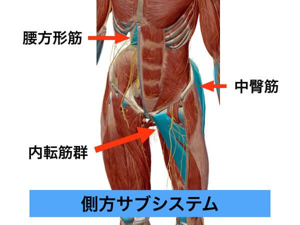 側方サブシステム,中臀筋,内転筋群,腰方形筋