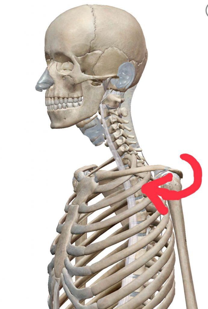 左肩関節の巻き肩イメージ