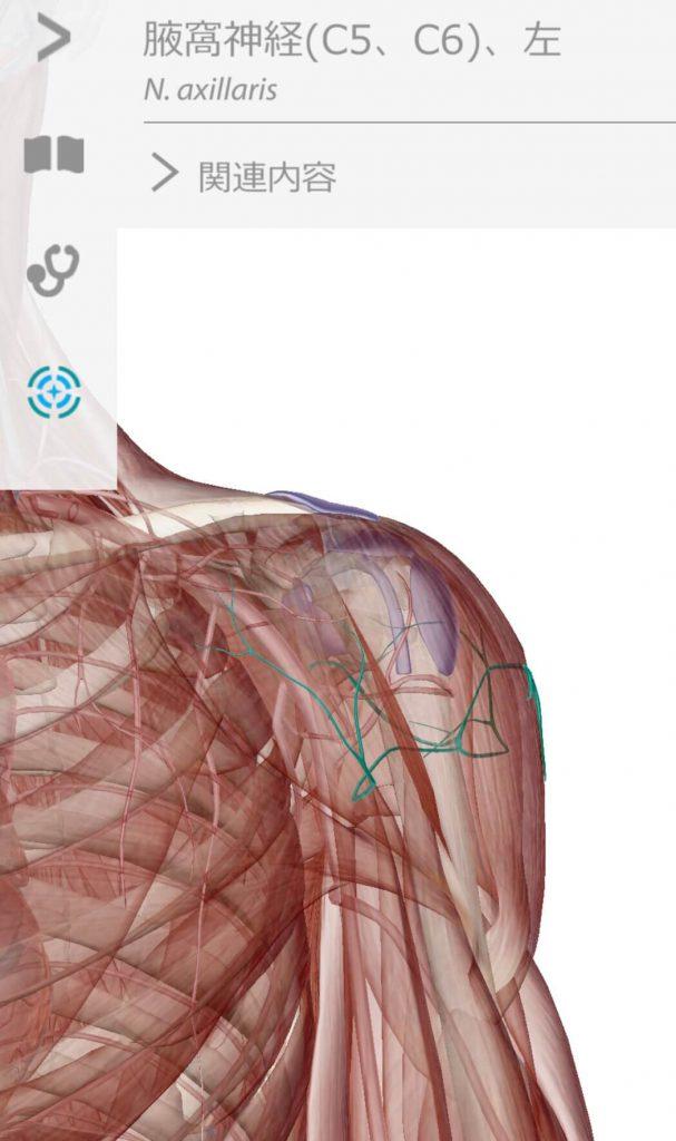 肩の痛みに関連する腋窩神経