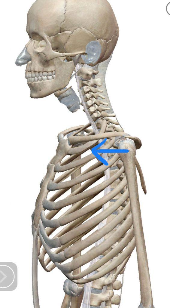 左肩関節の前方移動イメージ