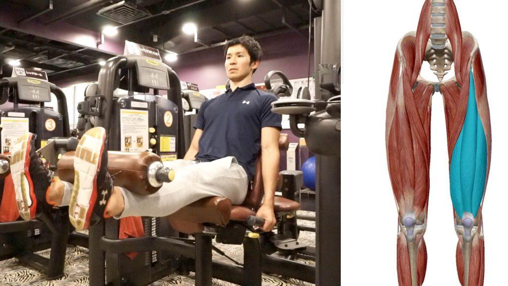 膝を鍛えるレッグエクステンションのトレーニングマシンFin