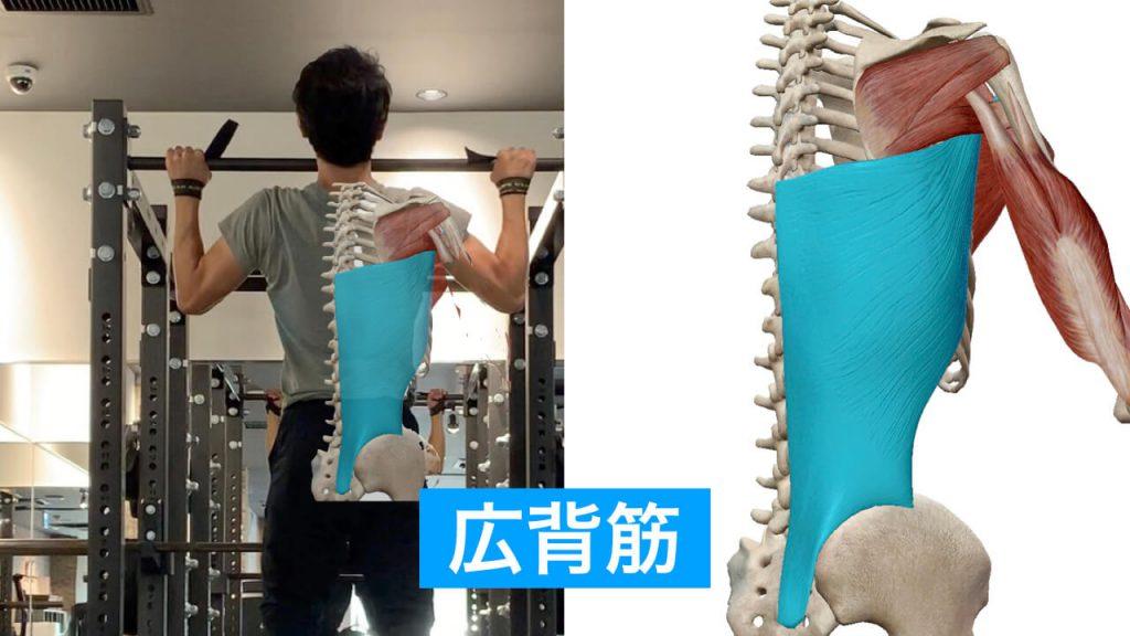 懸垂(チンニング)トレーニングのポイントと効果