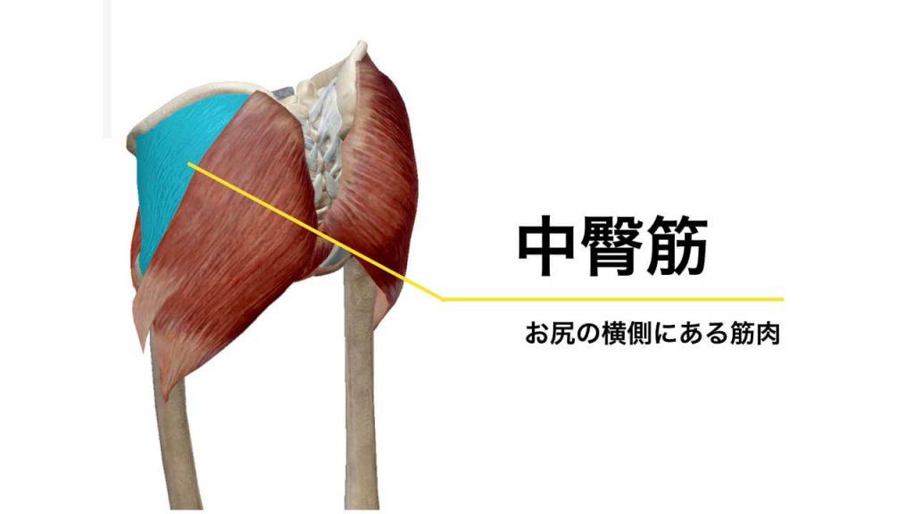 腰痛と関係する骨盤周りの筋肉・中臀筋