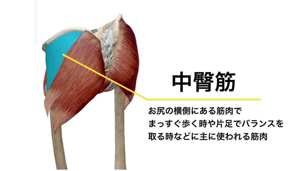骨盤の歪みにより腰痛を引き起こす原因にもなる中臀筋