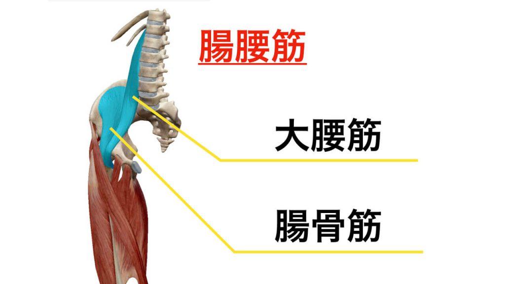 腰痛と関わりの強い腸腰筋の筋肉イメージ