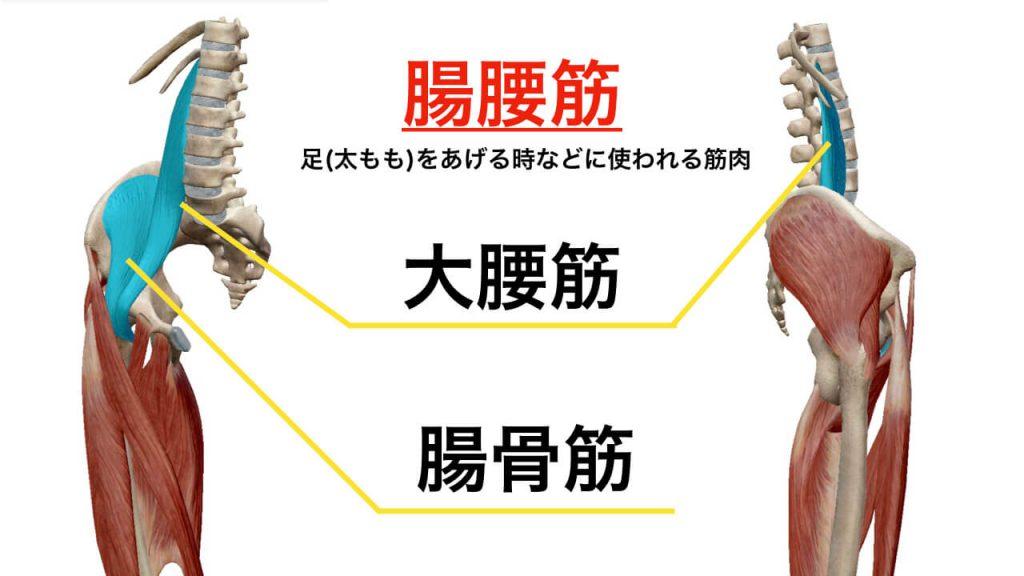 腸腰筋とは。腰痛との関係を解説