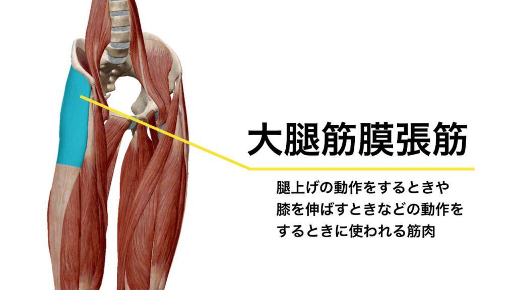 腰痛と大腿筋膜張筋の関係