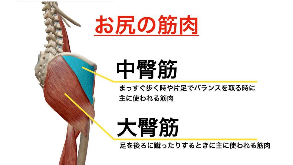 腰痛と大臀筋の関係図