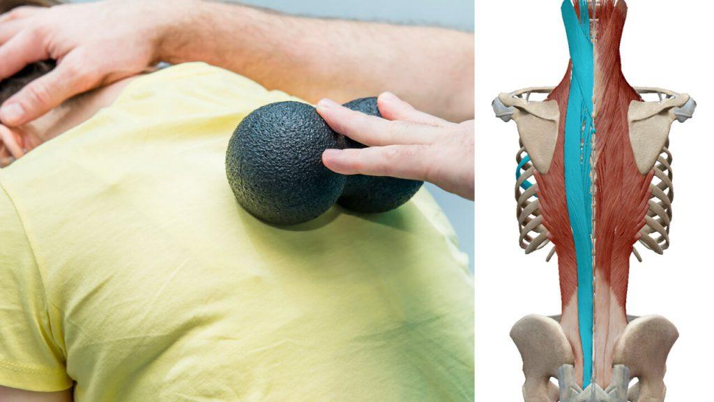 背骨用の筋膜リリースボール